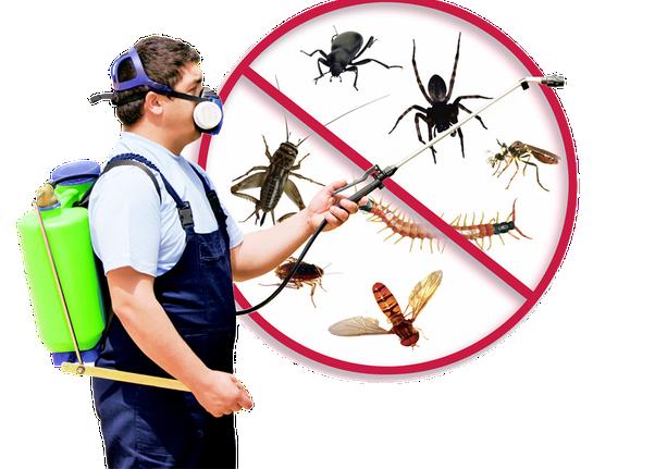 Emergency Pest Control New Milford CT