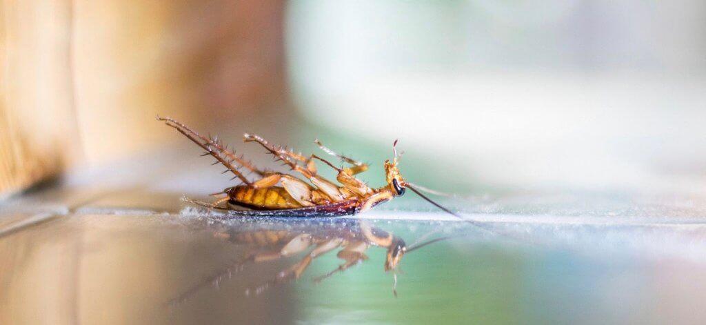 Pest Control Services Monticello ME